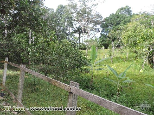 Fazenda na Estrada de Porto Acre