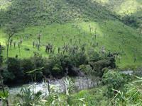 FAZENDA, Município de Niquelândia - GO, à 40 KM do município de Muquém