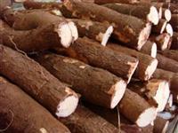 Vendo mandioca de mesa, para farinha, goma ou mesa, vendo por caixa ou toneladas