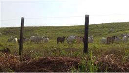 Fazenda Financiada - Breu Branco - Estado do Pará