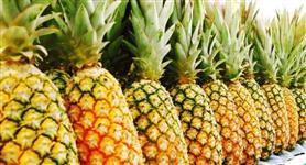 Sucos Concentrados e Polpa de Frutas em Tambores