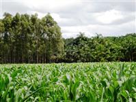 Fazendas no Paraná, Sao Paulo e Mato Grosso, Sul/norte