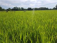Fazenda no Pantanal para pecuária, soja e agricultura.