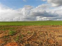 Fazenda 830 ha