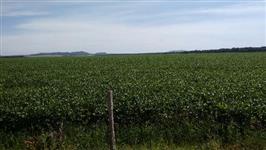 Fazenda próximo a Rio Verde GO para soja